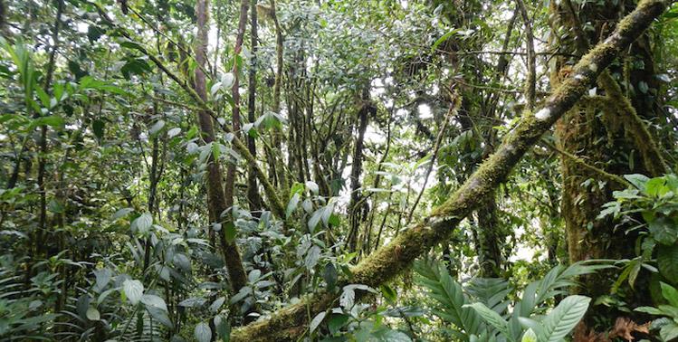 Darien Gap jungle Panama